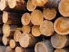 Кому належатимуть українські ліси
