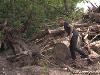 Лісосмуги з перешкодами. Чому захисні лісонасадження в Україні лишаються без догляду та без господаря?