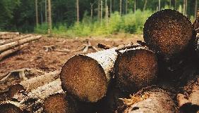 Хто збирає вершки лісової галузі?