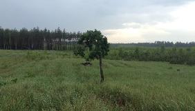 Ліс рубати не можна заборонити?