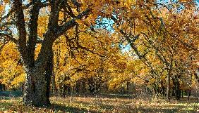 Тіні забутих нацпарків: лісові скарби
