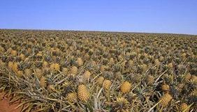 Як розвінчати фейк про вирощування ананасів в Україні
