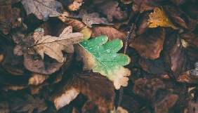 До 1 листопада - подача заявок на вебінари для журналістів «Як висвітлювати екологічні проблеми, пов'язані з конфліктами»