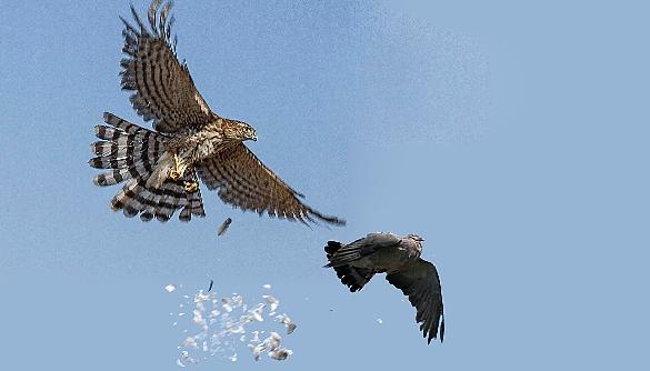 Комунікація з Донбасом: боротьба яструбів та голубів у владі