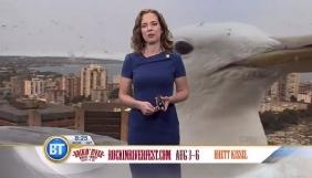 «Гігантський» мартин увірвався до прогнозу погоди канадського телеканалу