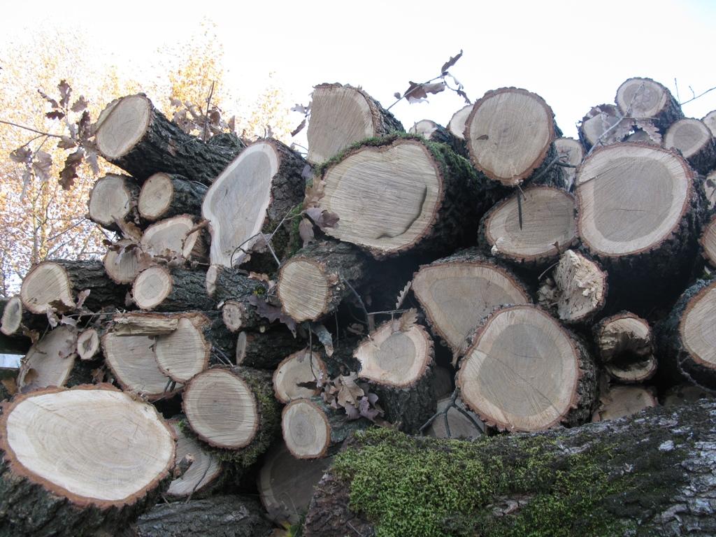 Про що пишуть/знімають переможці лісових журналістських конкурсів