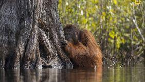 Журнал National Geographic назвав найкращих фотографів дикої природи 2017 року