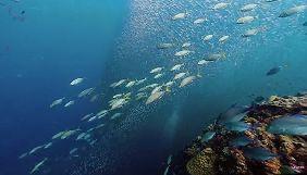 Канал BBC Earth виклав серію 10-годинних відео про океан
