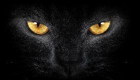 «Чорні коти» воєнного стану, яких ми вигадуємо самі