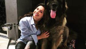 Канал «Україна» покаже прем'єру 4-серійного фільму «Рік собаки» виробництва «Арт Території»