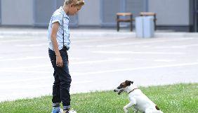 «Фокстер і Макс»: коли пес переграв людей, а спецефекти — сценарій