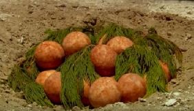 «2+2» випустив сюжет про «яйця динозаврів», в основі якого першоквітневий жарт – «Кременчук.Today»