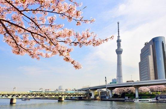 Медіаринок Японії: гроші, аудиторія, законодавчі вимоги