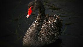 Країна «чорних лебедів». Медіапідсумки 24 лютого – 1 березня 2020 року