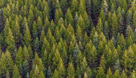 Українська природоохоронна група створила онлайн-курс про ліси для журналістів